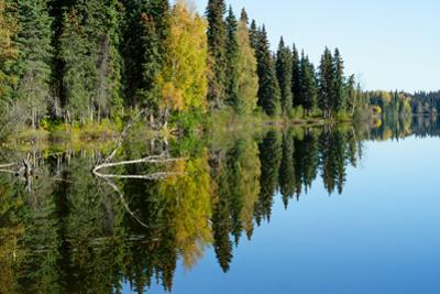 Forest Reflection in Lake by Latitude 59 LLP
