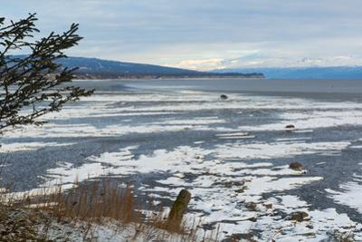 Lonely Tree Overlooking Frozen Tidal Flats by Latitude 59 LLP