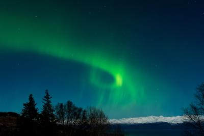 Strong Curled Green Aurora by Latitude 59 LLP