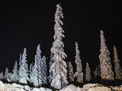 Weighed down by Snow and Light by Latitude 59 LLP
