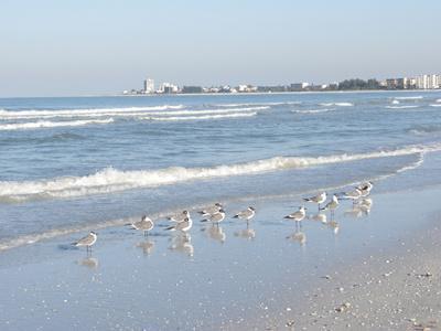 https://imgc.allpostersimages.com/img/posters/laughing-gulls-along-crescent-beach-sarasota-florida-usa_u-L-PXR8L60.jpg?artPerspective=n