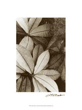Garden Textures I by Laura Denardo