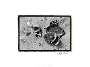 Sand Treasures II by Laura Denardo