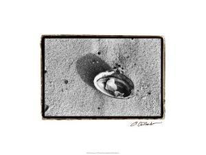 Sand Treasures VI by Laura Denardo