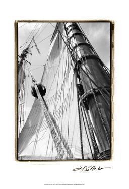 Set Sail III by Laura Denardo