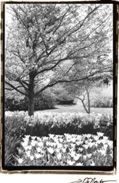 Springtime Garden III by Laura Denardo