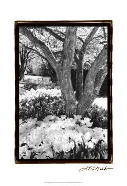 Springtime Garden VI by Laura Denardo