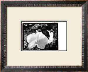 Striking Orchids I by Laura Denardo