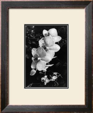 Striking Orchids II by Laura Denardo