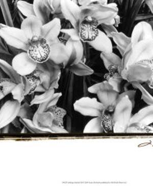 Striking Orchids III by Laura Denardo