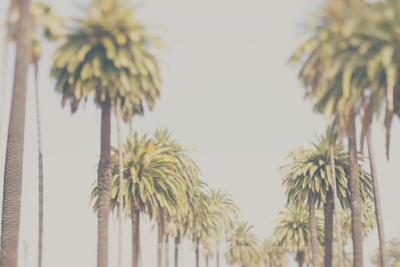California by Laura Evans