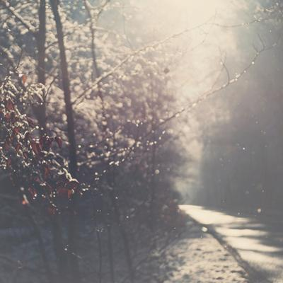 The Road Less Travelled by Laura Evans