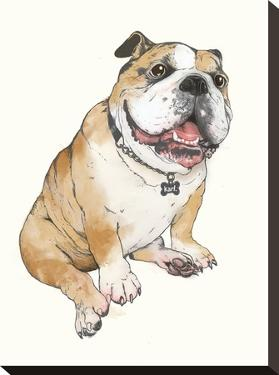 Bull Dog by Laura Graves