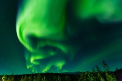 Aura Borealis (Northern lights) in Denali Wilderness National Park, Alaska, USA, North America by Laura Grier