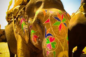 Painted Elephant, Amer Fort, Jaipur, India, Asia by Laura Grier