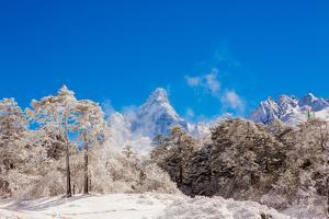 Peak of Mount Everest with snow covered forest, Himalayas, Nepal, Asia by Laura Grier