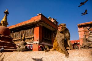 Sacred Monkey Temple, Kathmandu, Nepal, Asia by Laura Grier