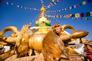 Sacred Monkey Temple (Swayambhunath Temple), UNESCO World Heritage Site, Kathmandu, Nepal, Asia by Laura Grier