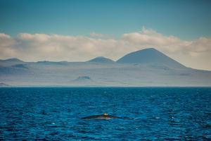 Sailing the Galapagos Islands, Ecuador, South America by Laura Grier