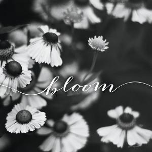 Bloom by Laura Marshall