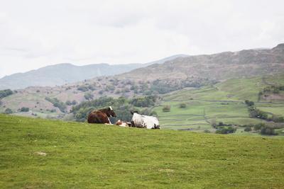 Lake District III