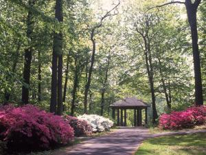 Azalea Way, Botanical Gardens, Bronx, NY by Lauree Feldman