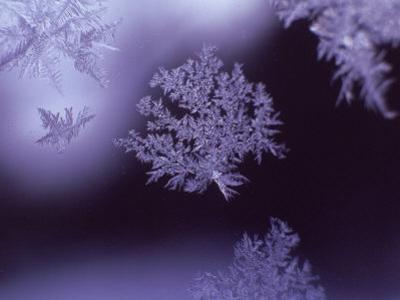 Snowflakes on Window
