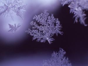 Snowflakes on Window by Lauree Feldman
