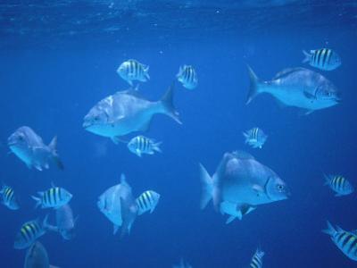 Tropical Fish, Caribbean by Lauree Feldman