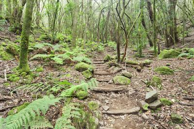 https://imgc.allpostersimages.com/img/posters/laurel-forest-laurisilva-parque-nacional-de-garajonay-la-gomera-canary-islands-spain-europe_u-L-PWFMPU0.jpg?p=0