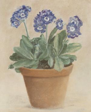 Auricula Bleue by Laurence David