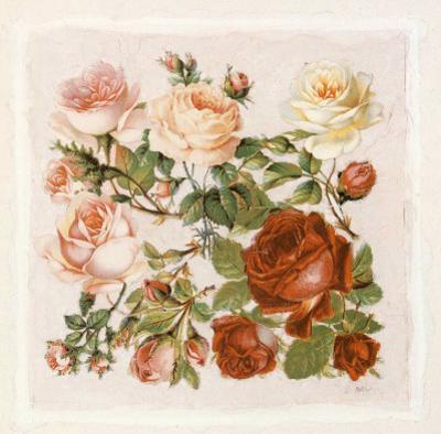 Buisson de Roses IV