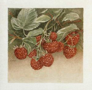 Framboises by Laurence David