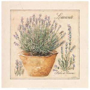 Herbes de Provence II by Laurence David