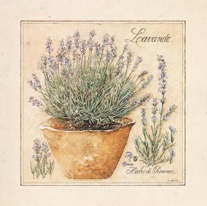 Herbes de Provence II by Laurence David