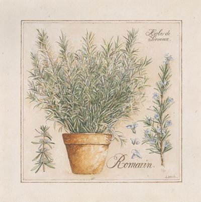 Herbes de Provence III by Laurence David