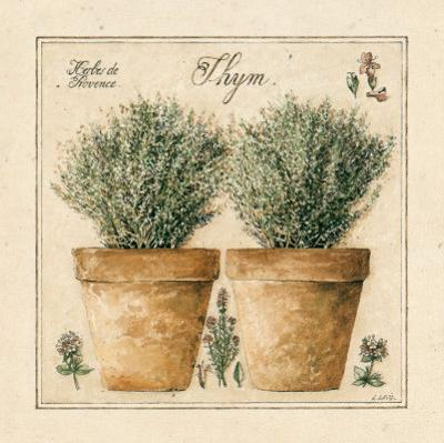 Herbes de Provence, Thym by Laurence David