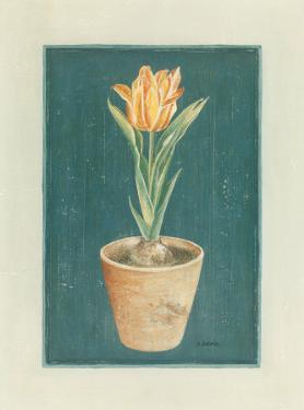 Tulipe Jaspé by Laurence David