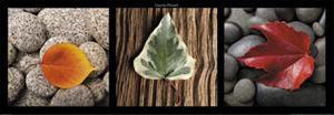 Leaves by Laurent Pinsard