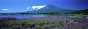 Lavender and Lake Kawaguchi Yamanashi Japan