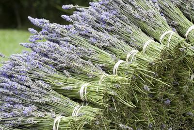 https://imgc.allpostersimages.com/img/posters/lavender-bunches-ii_u-L-Q10PZSJ0.jpg?p=0