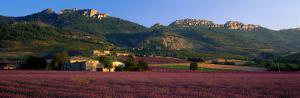 Lavender Fields and Farms, High Provence, La Drome, France