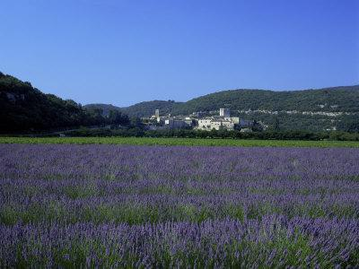 https://imgc.allpostersimages.com/img/posters/lavender-fields-outside-the-village-of-montclus-gard-languedoc-roussillon-france_u-L-P1TCMO0.jpg?p=0