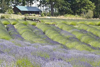 https://imgc.allpostersimages.com/img/posters/lavender-hill-i_u-L-Q10PZRS0.jpg?p=0