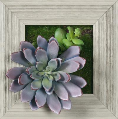 Lavender Succulent Square - Farmhouse Gray