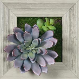 Lavender Succulent Square - Farmhouse Gray