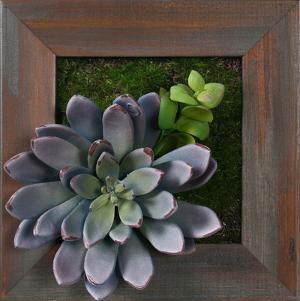 Lavender Succulent Square - Grayson Mahogany