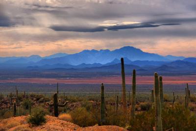 Sonoran Desert Floor by Lawrence Goldman Photography