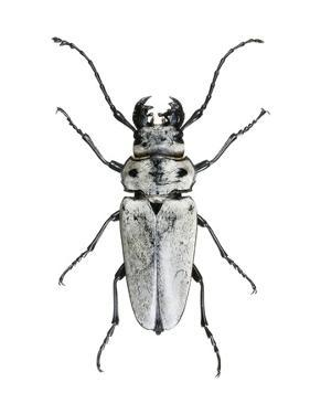 Entomology Posters at AllPosters.com