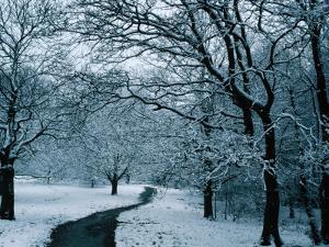 Hampstead Heath in Winter, London, England by Lawrence Worcester